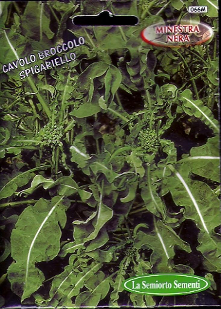 Cavolo Broccolo Spigariello Foglio Liscia (25-91)