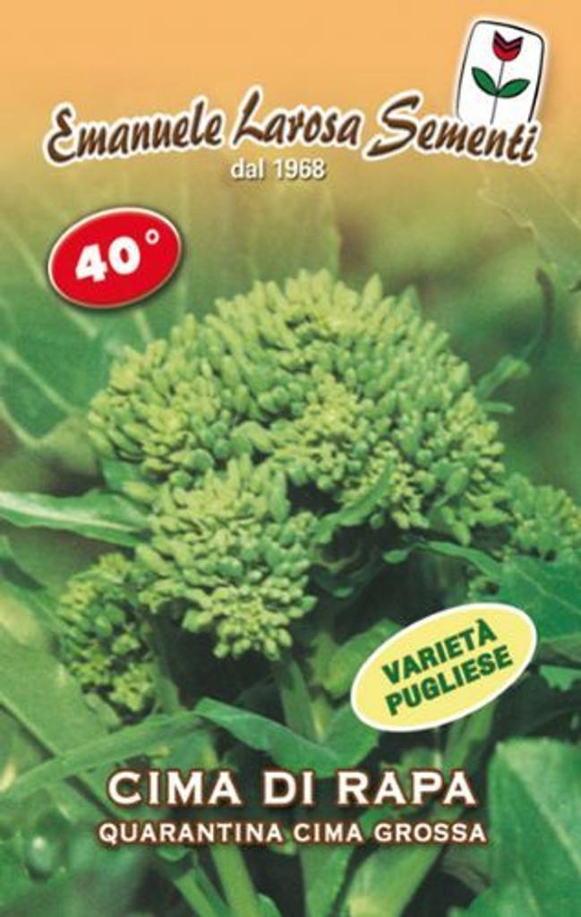 Cima di Rapa Quarantina (40 day) Cima Grossa Fasanese (41-96)