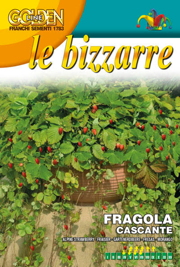 Strawberry Fragola Cascante Attila (63-4)