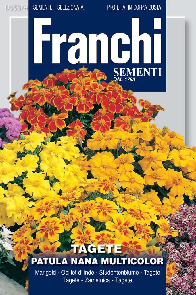 Marigold Patula Nana Multicolor (353-4)