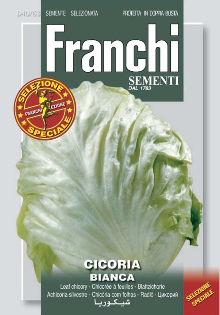 Chicory Bianca Invernale (40-63)