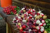 Radish & Turnip