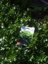 Plenty of parsley!
