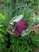 A photo of cauliflower violetta sent in by a customer in California.