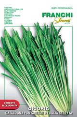 Chicory Catalogna Puntarelle a Foglie Stretta (40-21)
