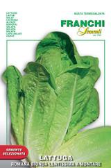 Lettuce Romaine Bionda Lentissima (84-13)