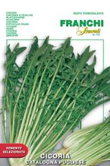 Chicory Catalogna Pugliese (40-9)