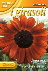 Sunflower Evening Sun (329-12)