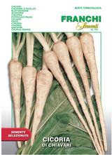 Root Chicory - Cicoria di Chiavari  (40-14)