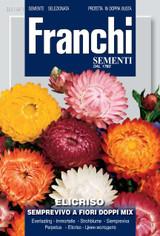 Strawflower - Helichrysum (318-1)