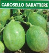 Cucumber Melon Tondo Barattiere (37-52)