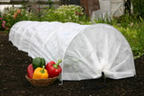 Tips for Fall Gardening Success