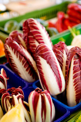 Seeds from Italy Radicchio and Endives successful in trials