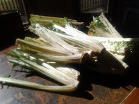 Cardoon is prepared for cooking by removing the spiny leaves and cutting them back.