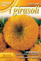 Dwarf Yellow Sunflower (329-2)