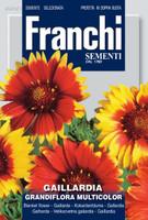 Gaillardia Grandiflora Multicolor Mix - Blanket Flower (324-1)