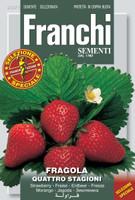 Strawberry Alpine/ Quattro Stagioni (63-1)