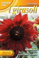 Sunflower Red Sun (329-6)