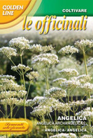 Angelica Archangelica L  (GL3-60)