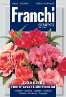 Satin Flower / Godetia (330-1)