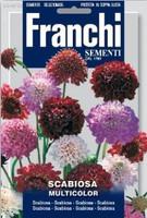 Pincushion Flower / Scabiosa (349-30)