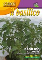 Lemon Basil (13-13)