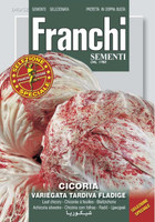 Chicory Variegata di Chioggia Tardiva - Sel. Fladige