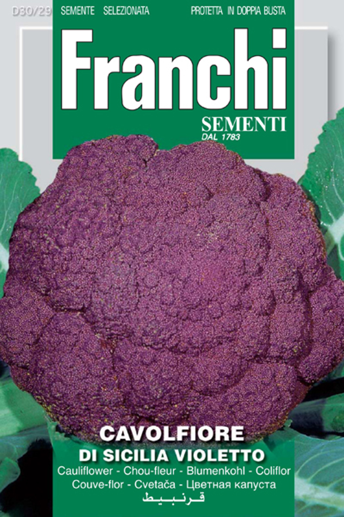 V 390 CAULIFLOWER Sicilia Violetto Heirloom Seeds