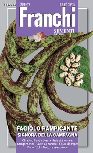 Bean Signora della Campagna (57-16)