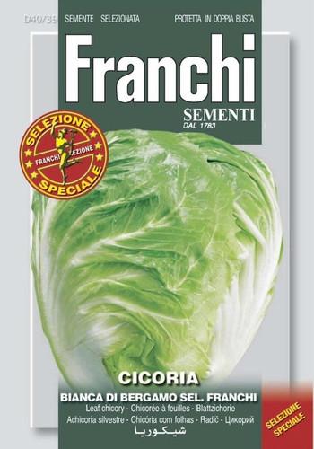 Chicory Bianca a Bergamo (40-39)