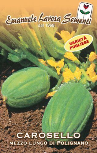 Cucumber Carosello Mezzo Lungo di Polignano (Barese) (37-99)