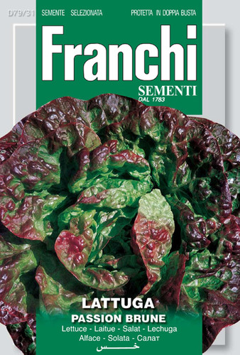 Lettuce Passion Brune (79-31)