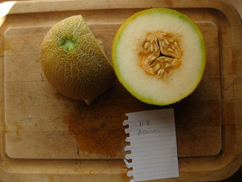 An Ananas melon grown by Holly Dumont.  Brix of 11.8.  Very sweet.