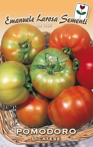 Tomato Licatese (106-42)