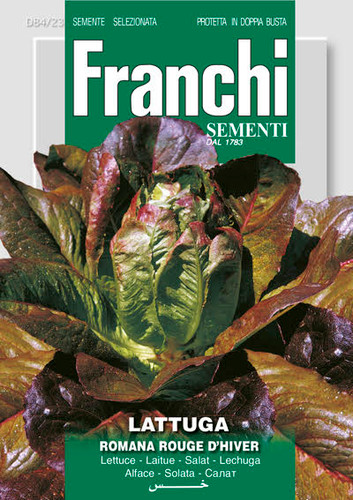 Lettuce Red Romaine / Rouge d'Hiver (84-23)