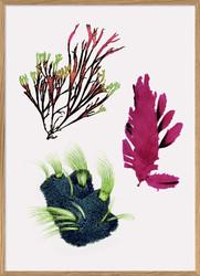 #2203 Seaweed 4