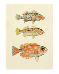 #3901P Fishes