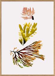 #2201 Seaweed 2