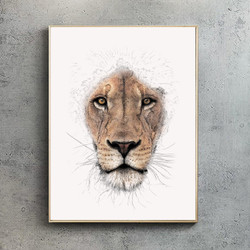 Lion by Ben Rothery