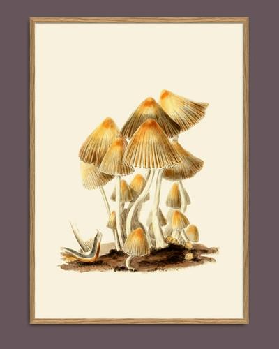 #2101 Fungi