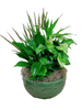 Emerald Dish Garden:  assorted green and flowering plants in a glazed ceramic container