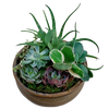 Succulent Garden in Ceramic Container