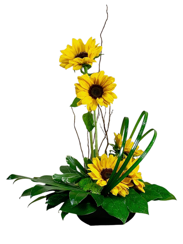 Sunflower Zen:  modern arrangement of sunflowers in a low black bowl