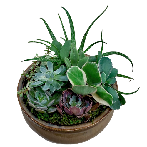 Succulent Garden in Ceramic Container