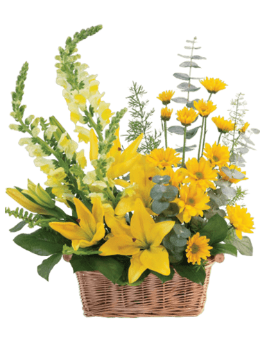 Mellow Yellow Basket:  arrangement of yellow lilies, snapdragons, and daisies, in a woven birch basket.