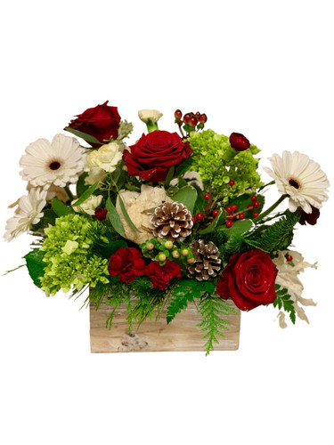 Holiday Homecoming:  arrangement of red roses, white gerbera, and green hydrangea, with winter greens, pinecones, and berries, in a wooden planter box