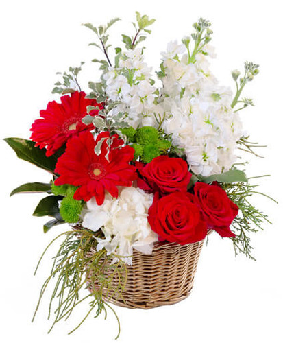 Merry and Bright:  basket arrangement of white stock, red gerbera, red roses, and white hydrangea, with holiday greens.