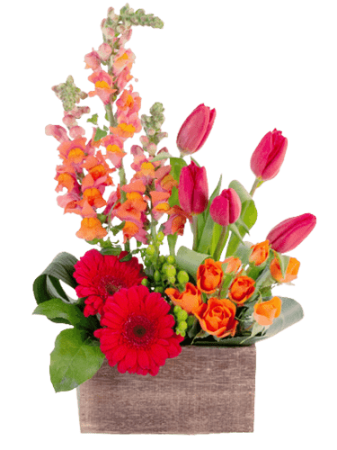 March Gladness,' a modern farmhouse-style design of snapdragons, tulips, gerbera, and spray roses, in bright tones of pink, red, and orange, presented in a rustic wooden container.