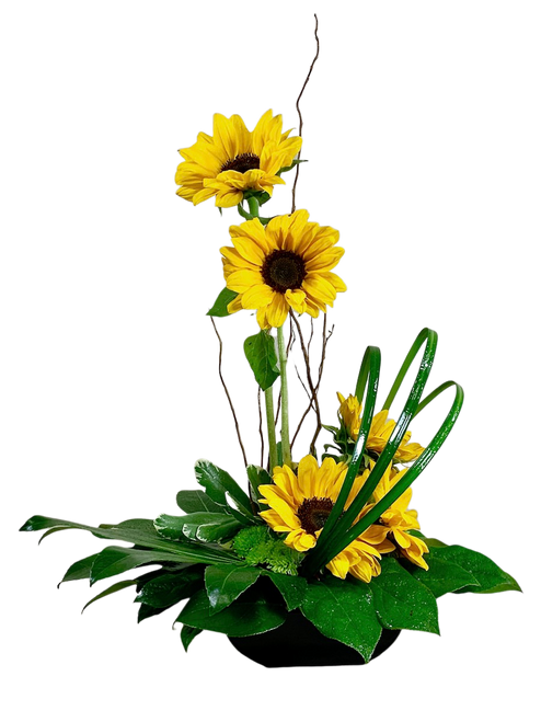 Sunflower Zen:  modern arrangement of sunflowers in a low black bowl