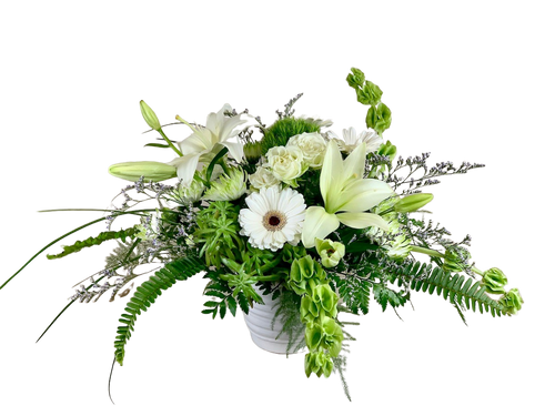 Everlasting Spring:  arrangement of white gerber daisies, white lilies, green trick dianthus, lime Zembla cushion poms, and green Bells of Ireland, with sword fern and lily grass, in a white ceramic container